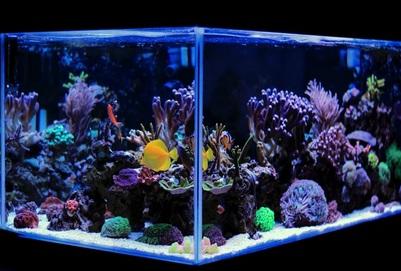 Are You Buying 120 Gallon Aquarium?